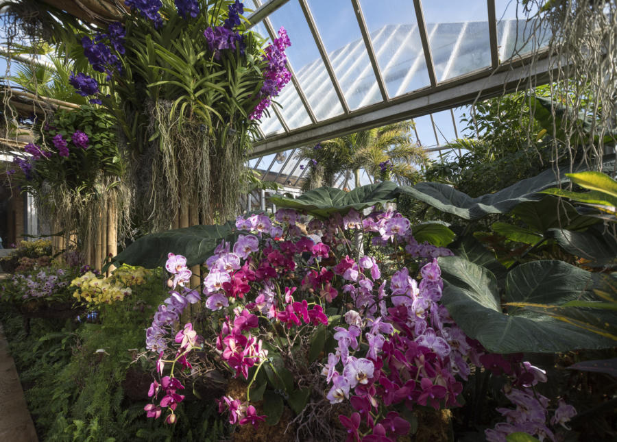 Celebrate Spring At Chicago S Best Flower And Garden Shows