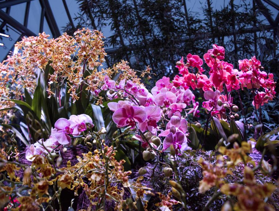 Orchids Show at Chicago Botanic Garden