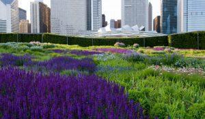 7 unique Chicago picnic spots