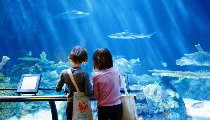 Kids at Shedd Aquarium