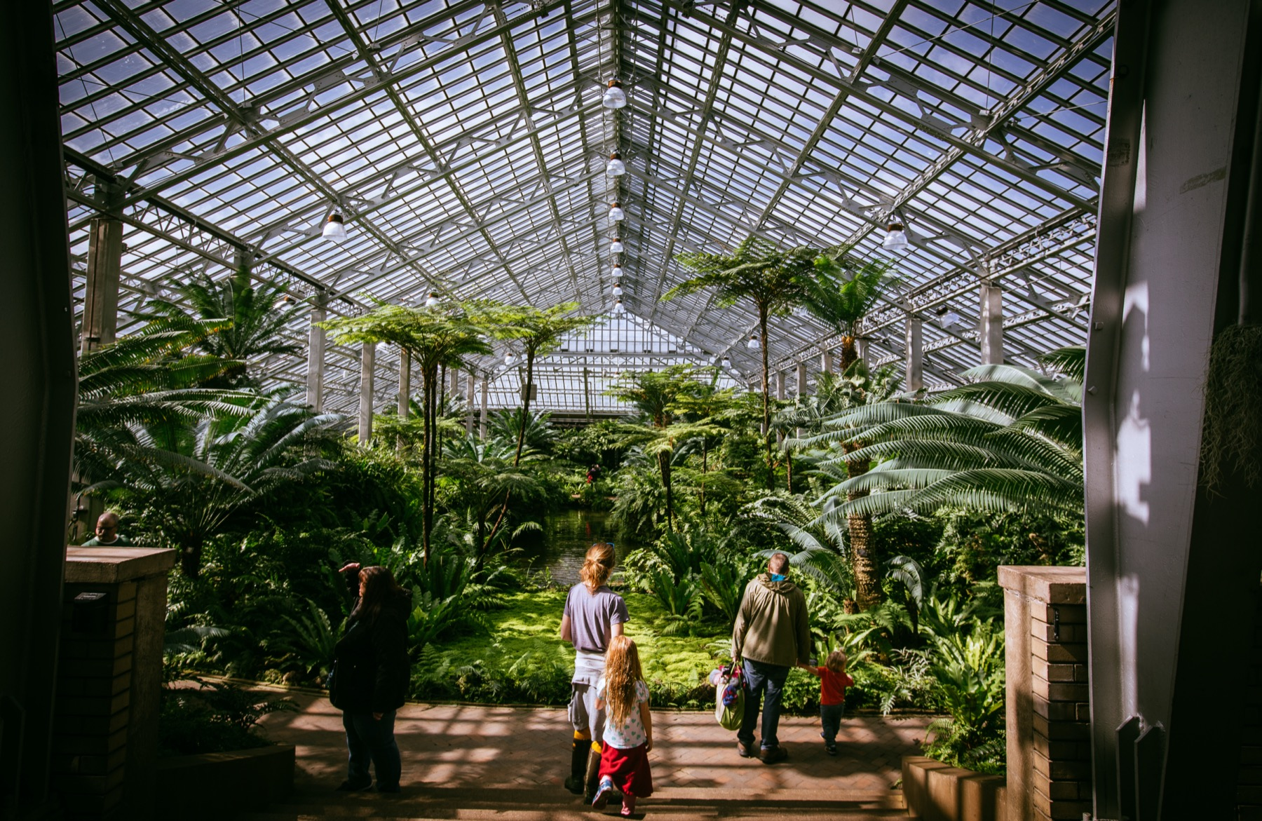 Garfield Park Conservatory fern room