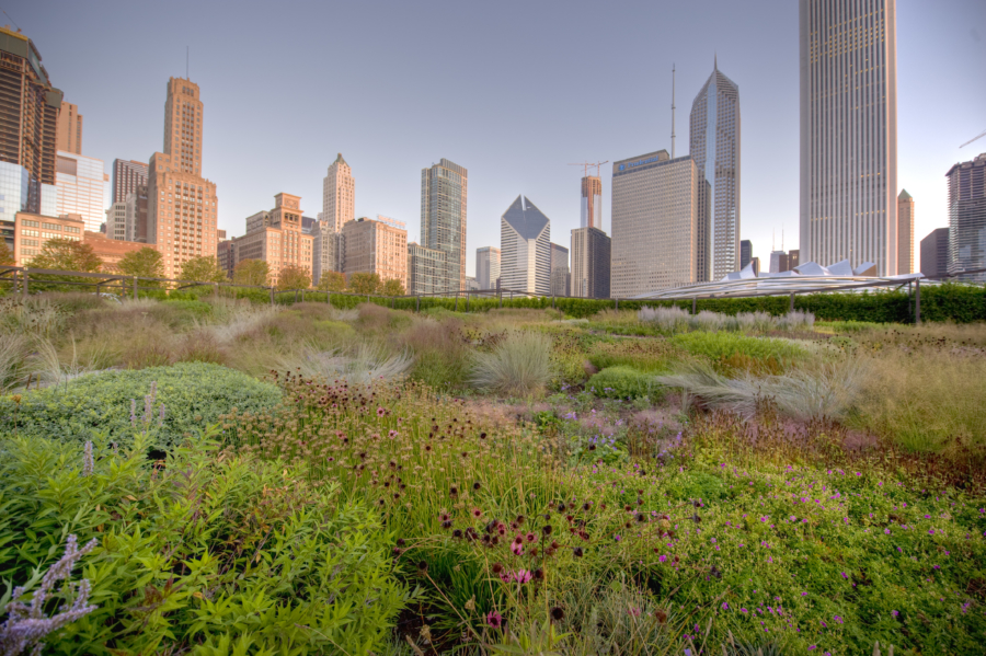 Millennium Park Lurie Garden