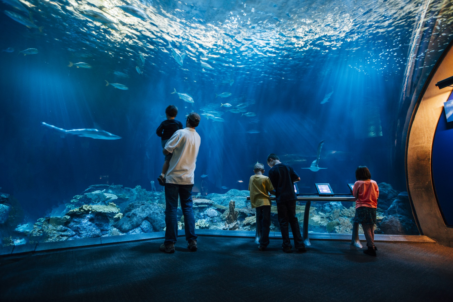 Shedd Aquarium Chicago kids