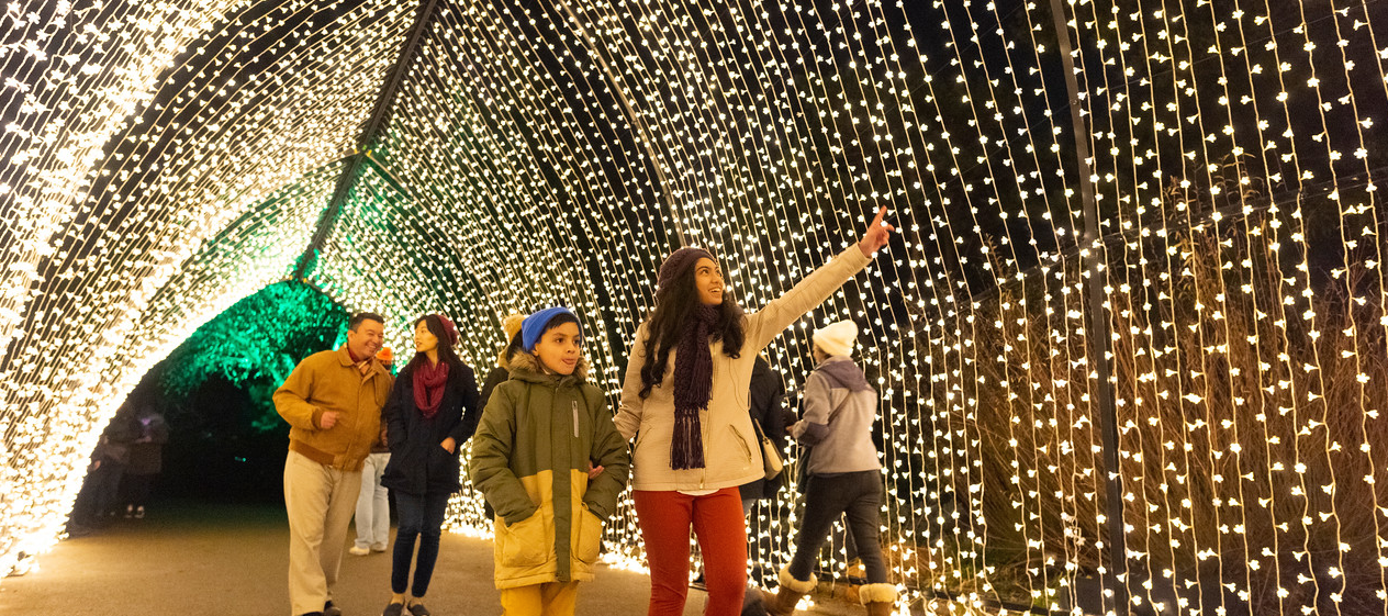 Top spots in Chicago for Christmas lights