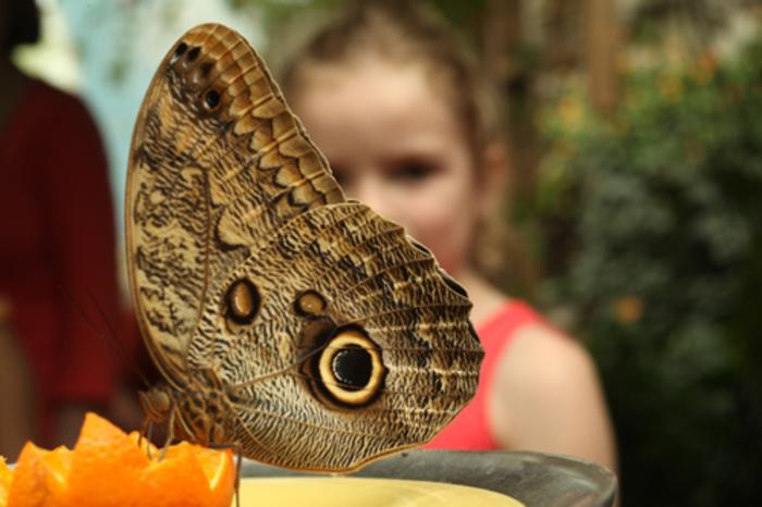 Peggy Notebaert Nature Museum Butterfly