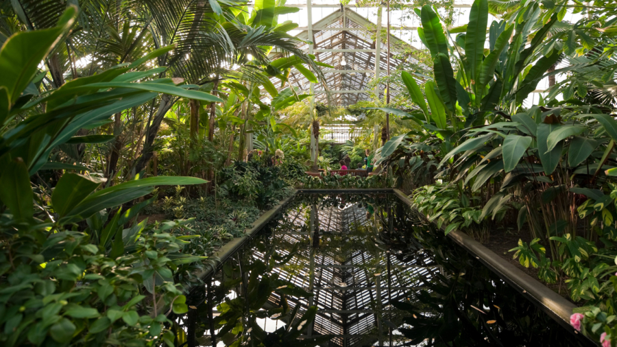 Stroll through the scenic Garfield Park Conservatory