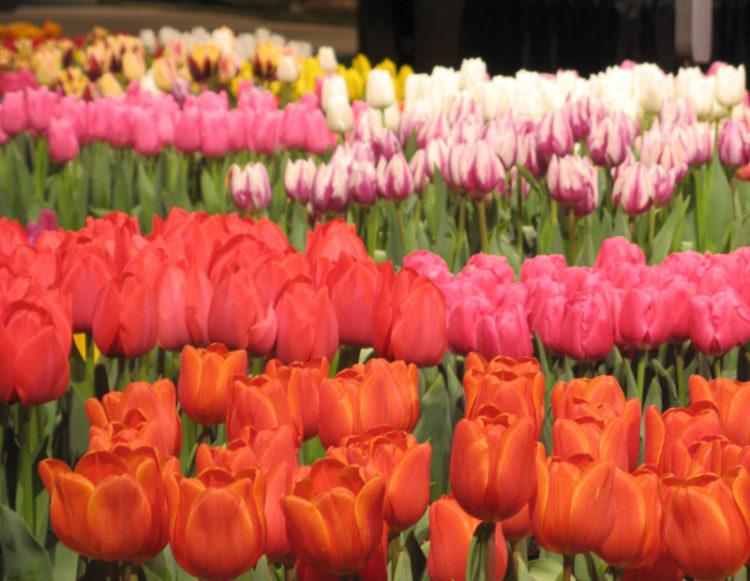 Macy Flower Show
