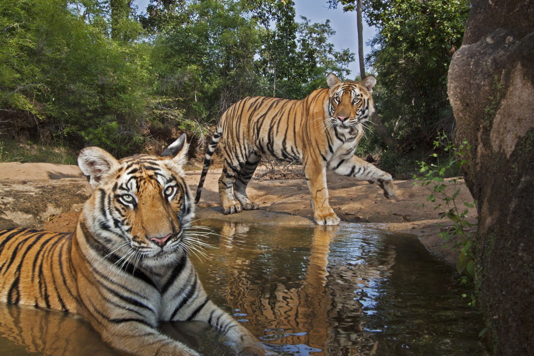 National Geographic Live — On the Trail of Big Cats