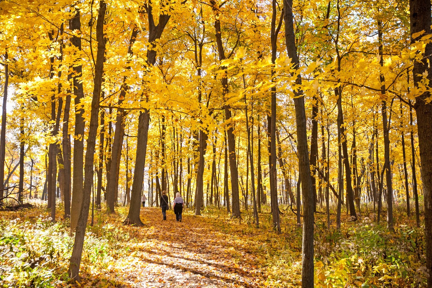 Morton Arboretum in fall