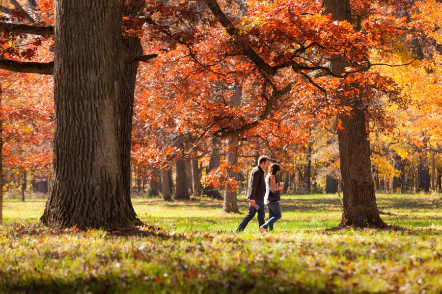 Morton Arboretum- Autumn Foliage