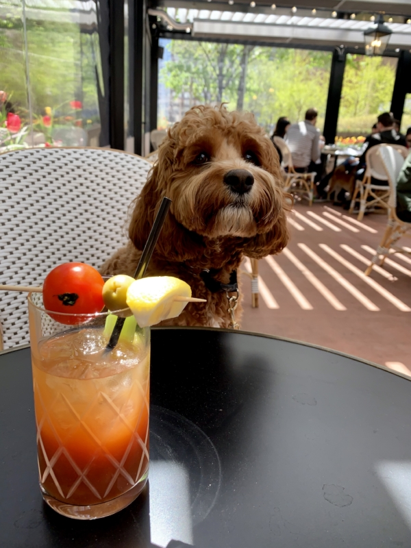 Taureaux Tavern patio with small brown dog
