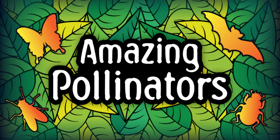 Amazing Pollinators