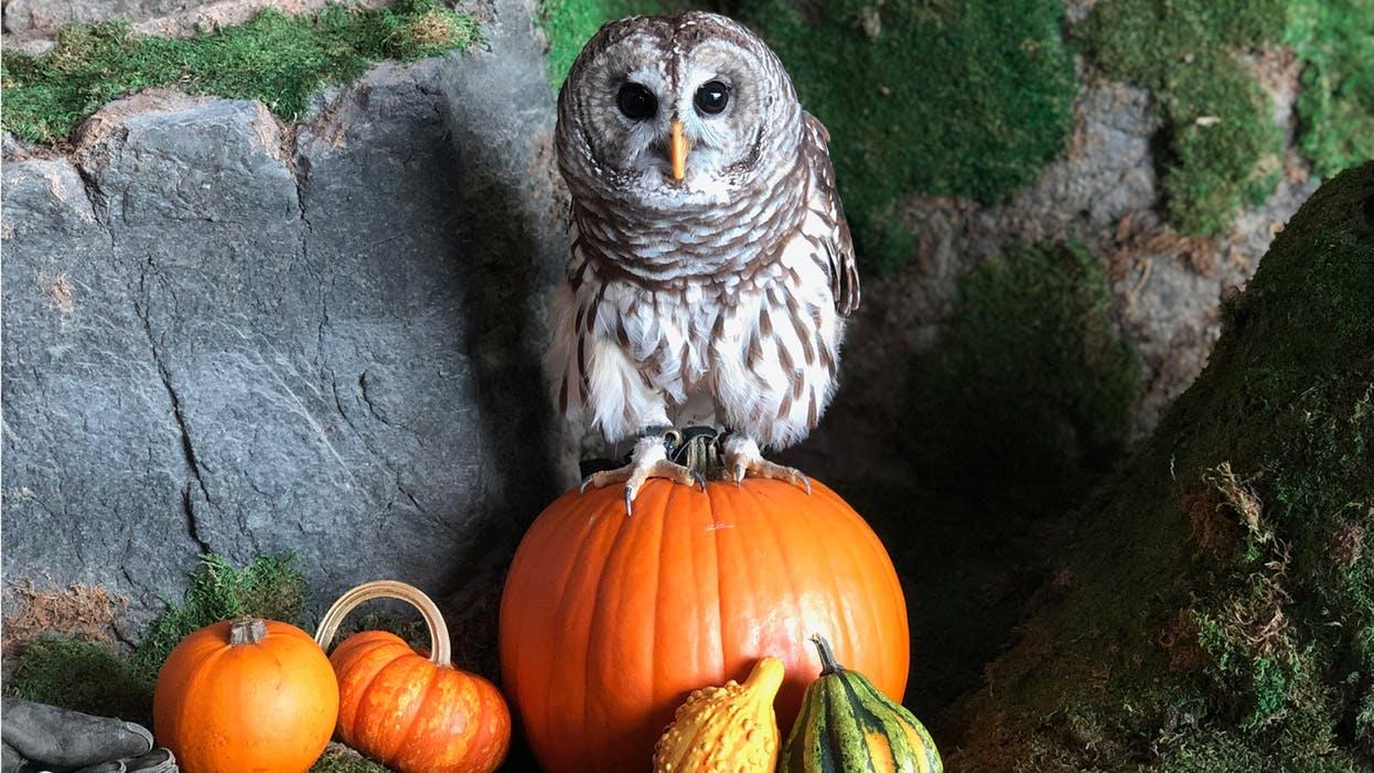 Shedd After Hours: Halloween
