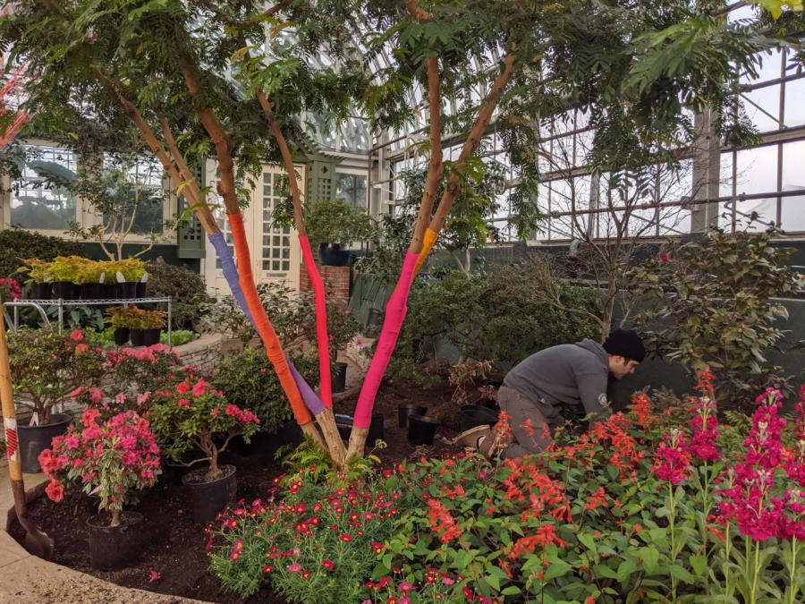 Garfield Park Conservatory- Spring Flower Show