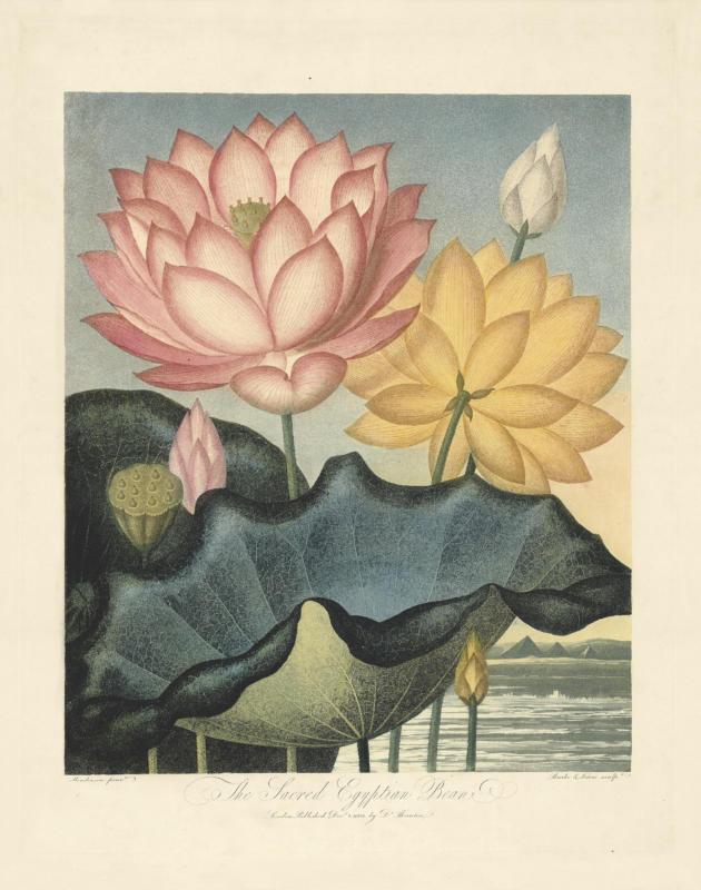 Dr. Robert John Thornton's Temple of Flora—The Complete Original 19th Century Work