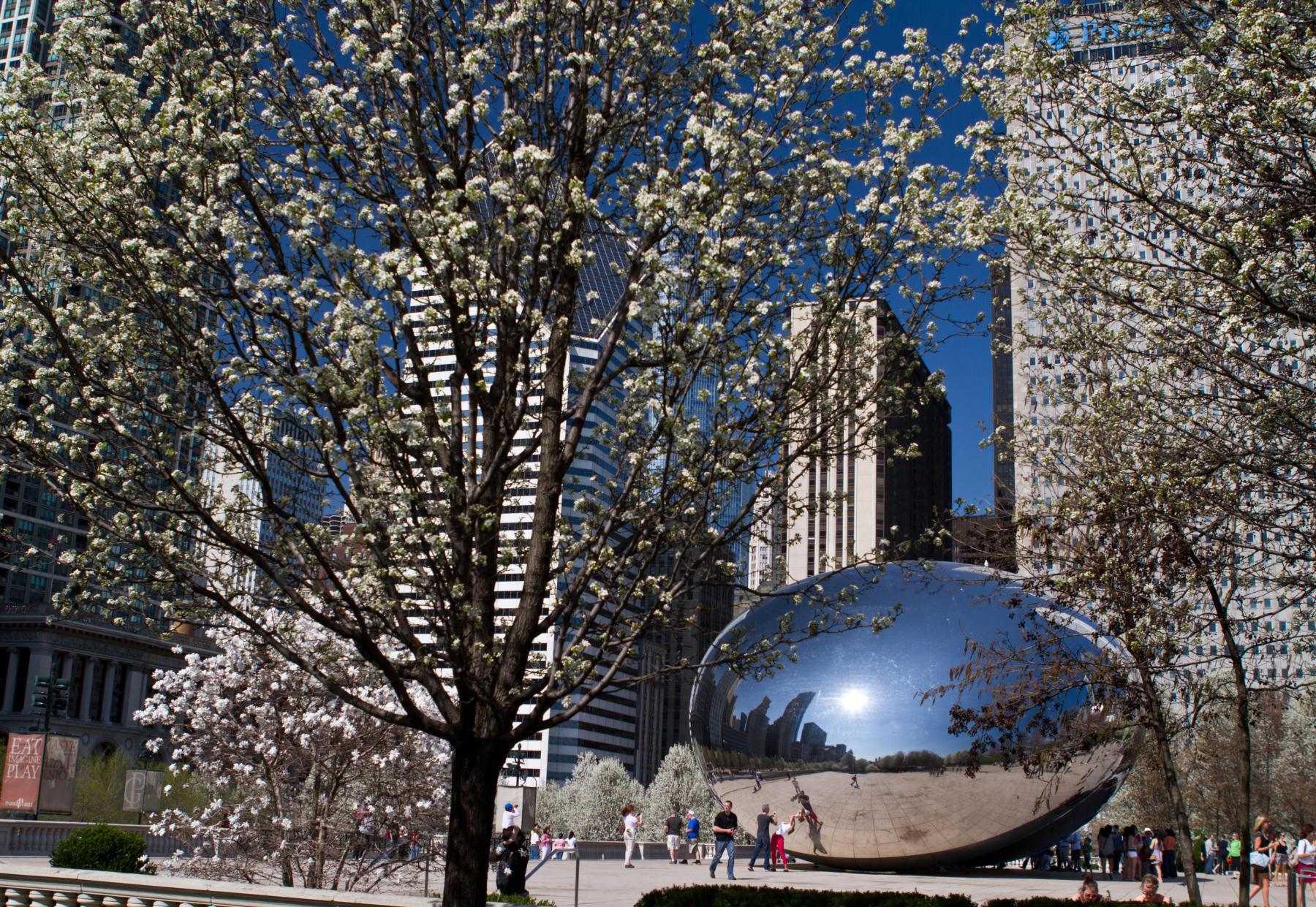 The Bean in Spring