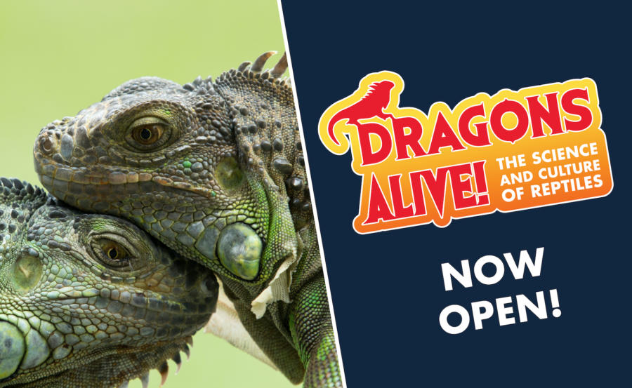 Dragons Alive!