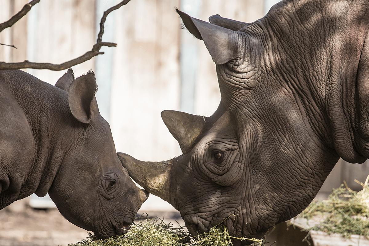 Virtual Meet-and-Greet a Lincoln Park Zoo Animal