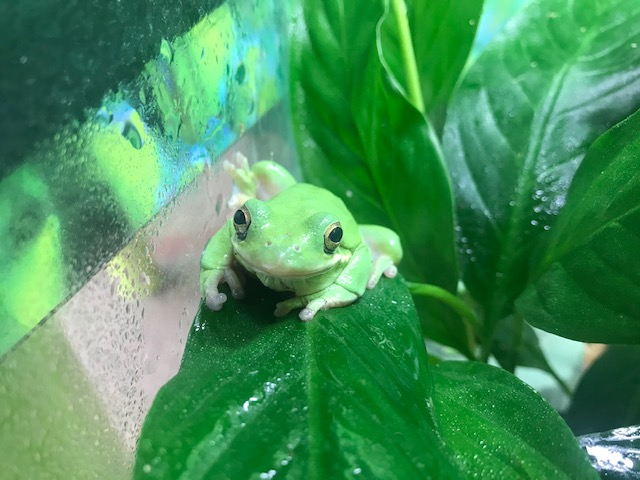 Virtual Breakfast with the Animals: Amphibians and Reptiles