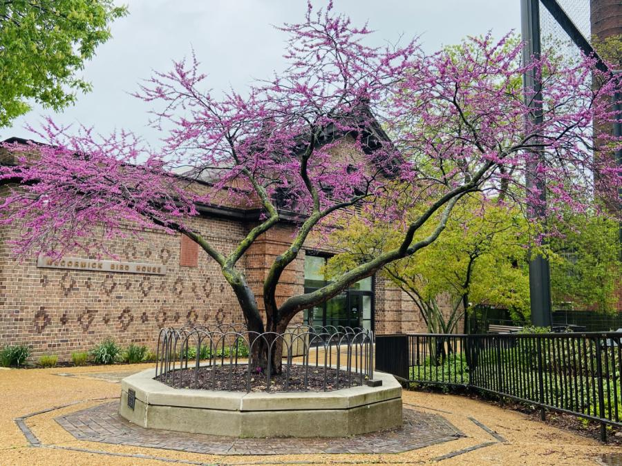 Virtual Gardening with Lincoln Park Zoo