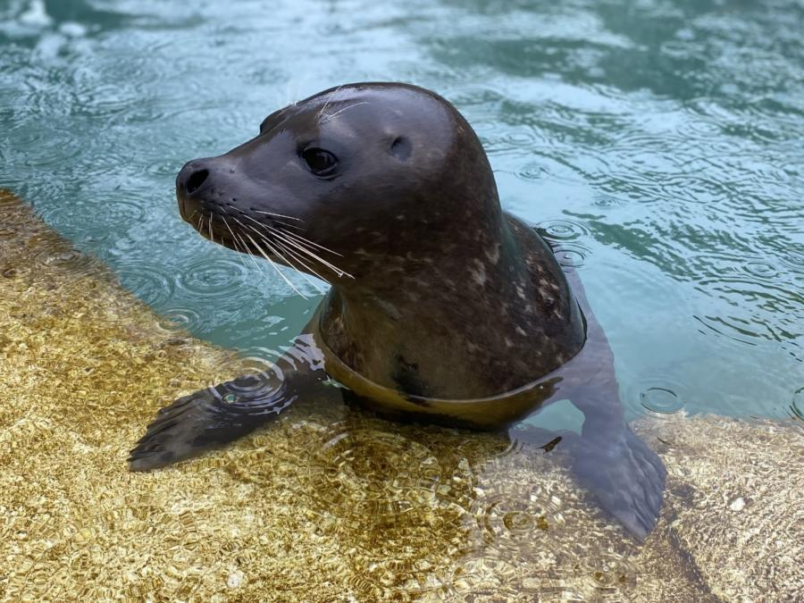Virtual Meet-and-Greet with a Lincoln Park Zoo Animal