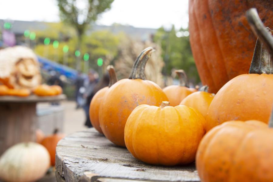 Pumpkins at Lincoln Park Zoo