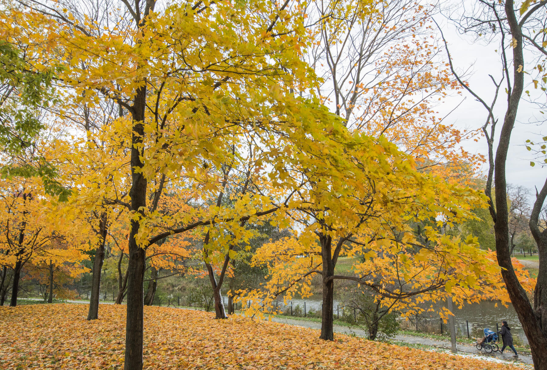 Humboldt Park in fall