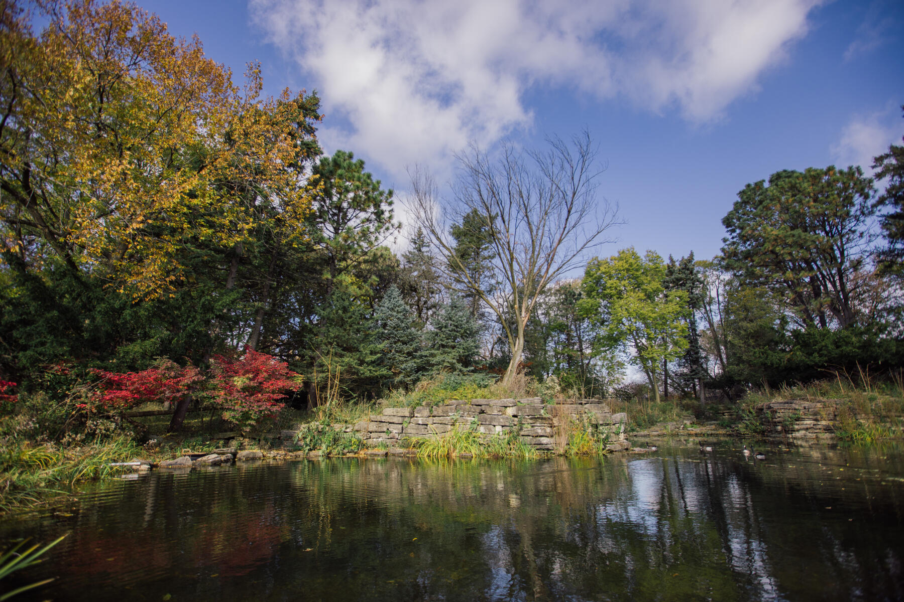 North Park Nature Center in fall