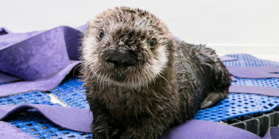 Virtual Otter Encounter