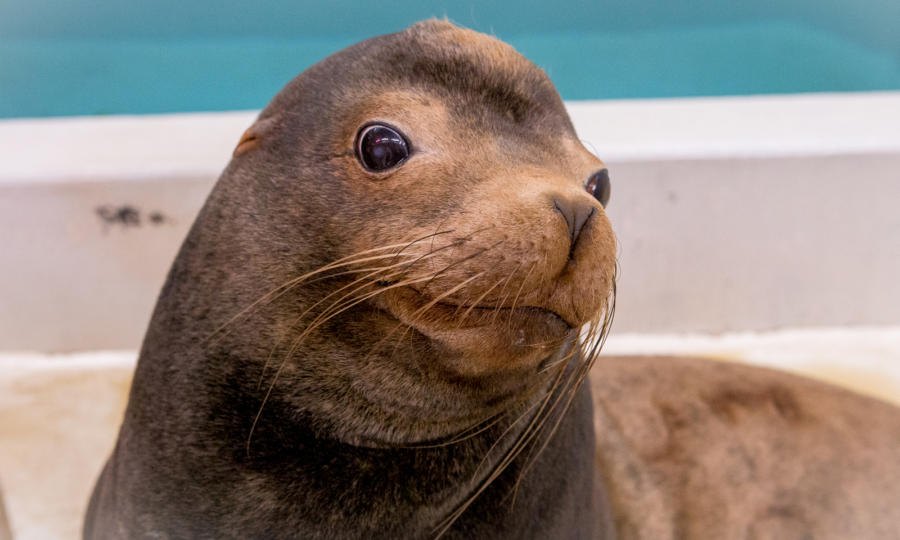 Virtual Sea Lion Encounter