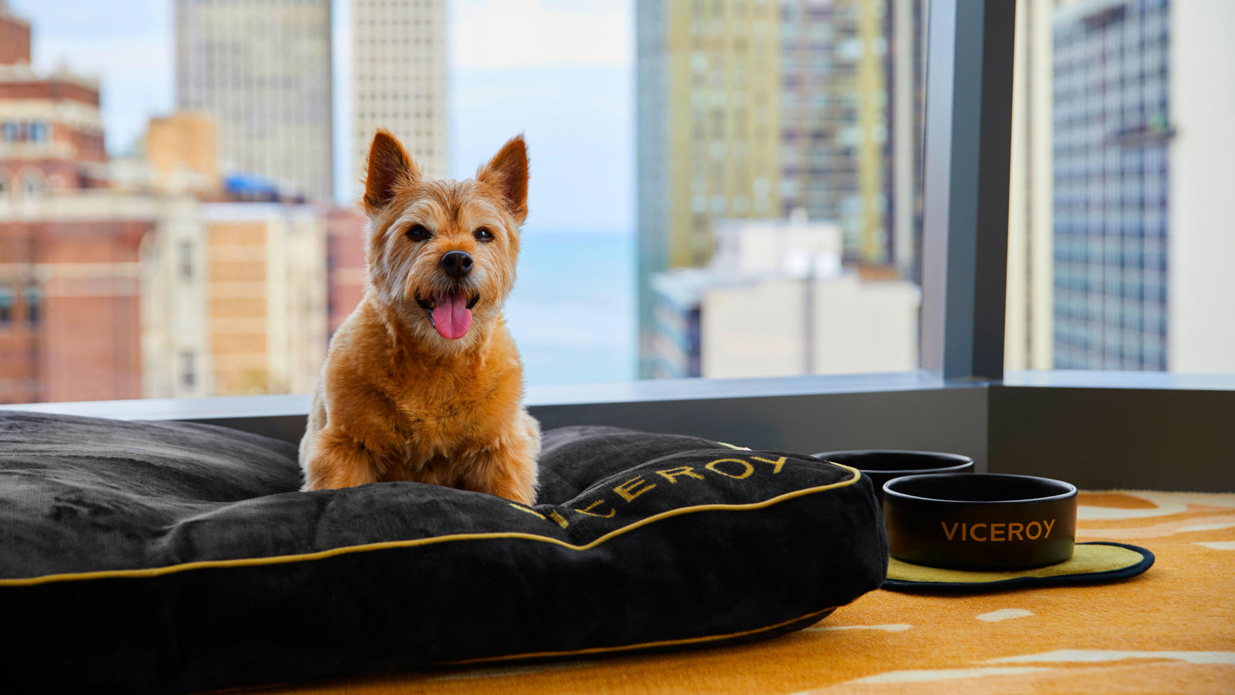 Viceroy Chicago Pet-Friendly Dog Bed
