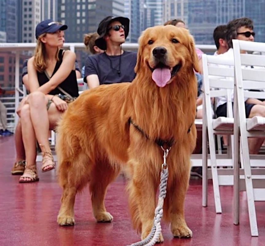A pup aboard a Chicago cruise