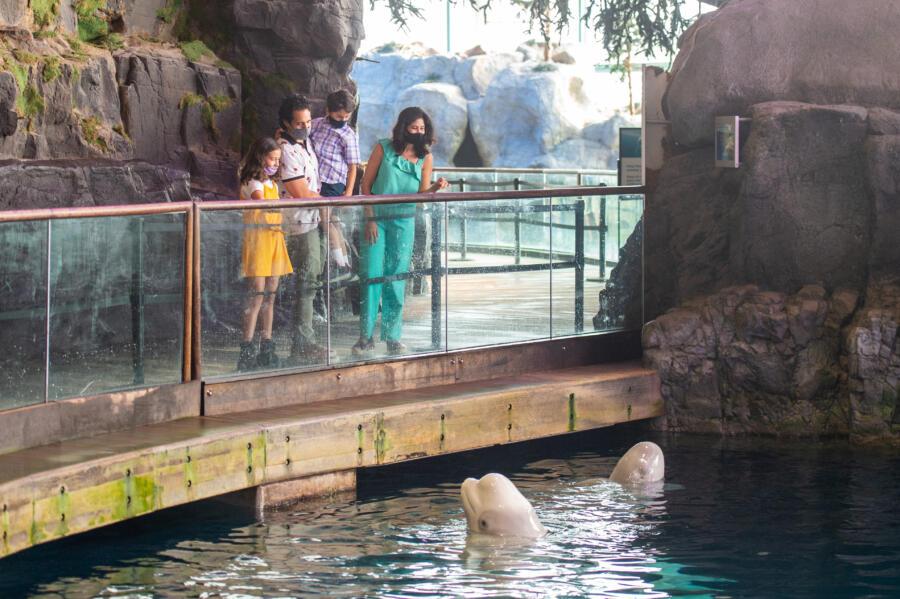 A family at the Shedd Aquarium