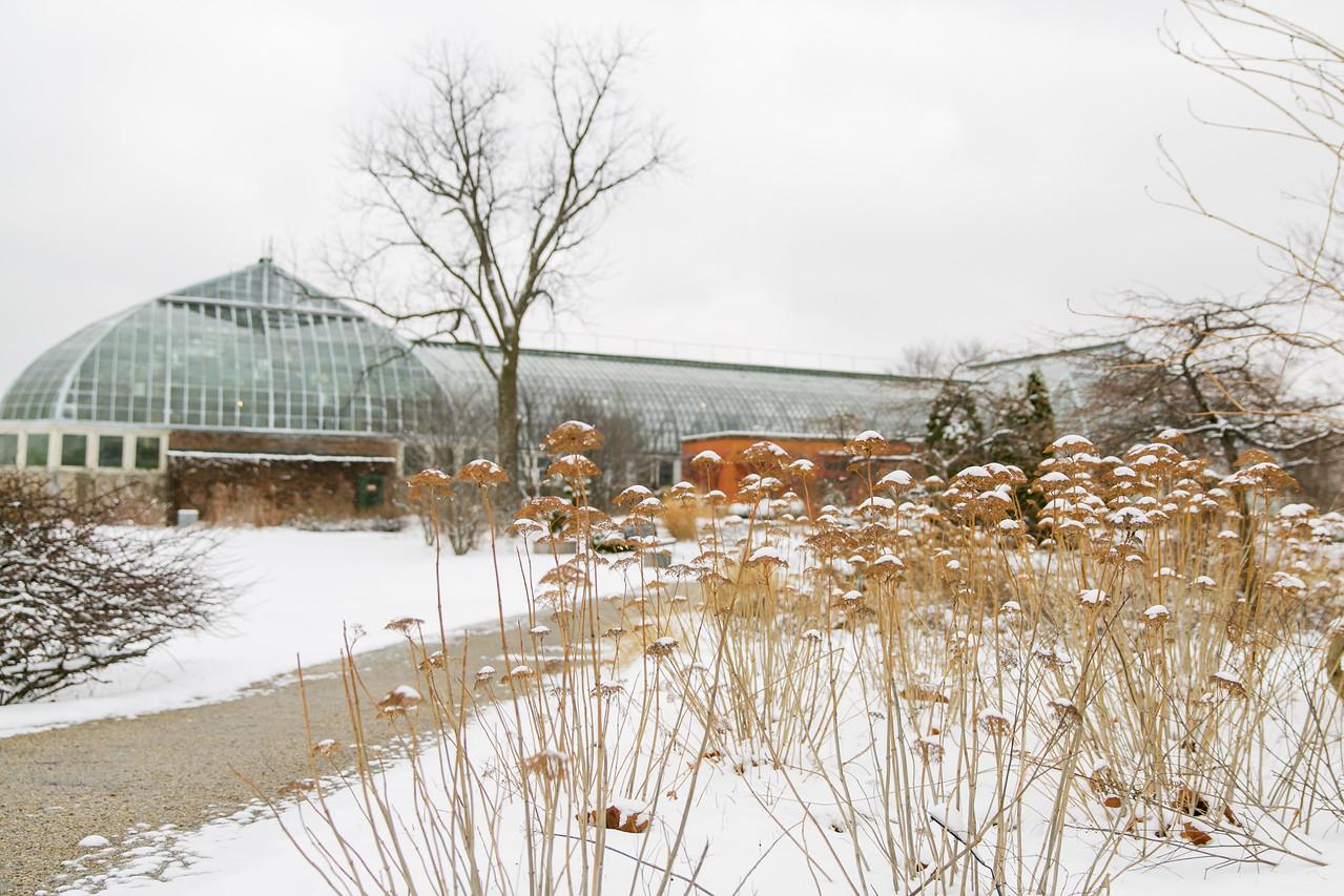 Virtual Winter Tree ID Walk