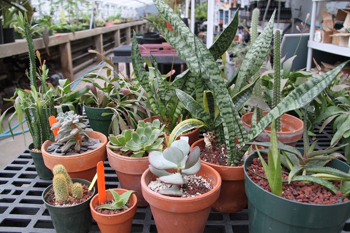 Online Gift Shop Pop Up: Annual Plant Sale