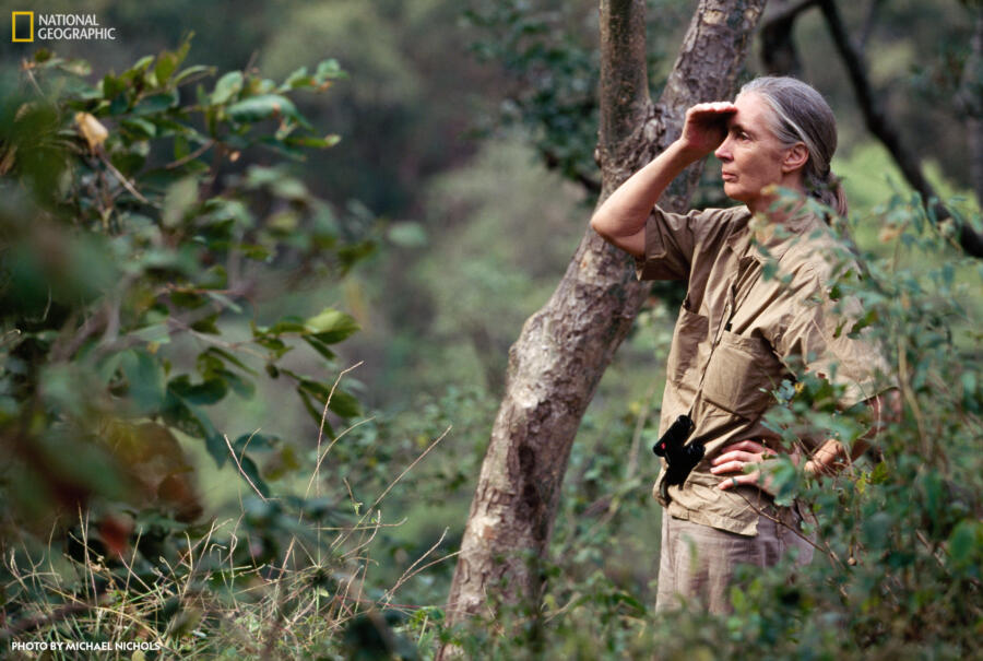 Jane Goodall in the Jungle