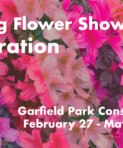 Spring Flower Show: Saturation