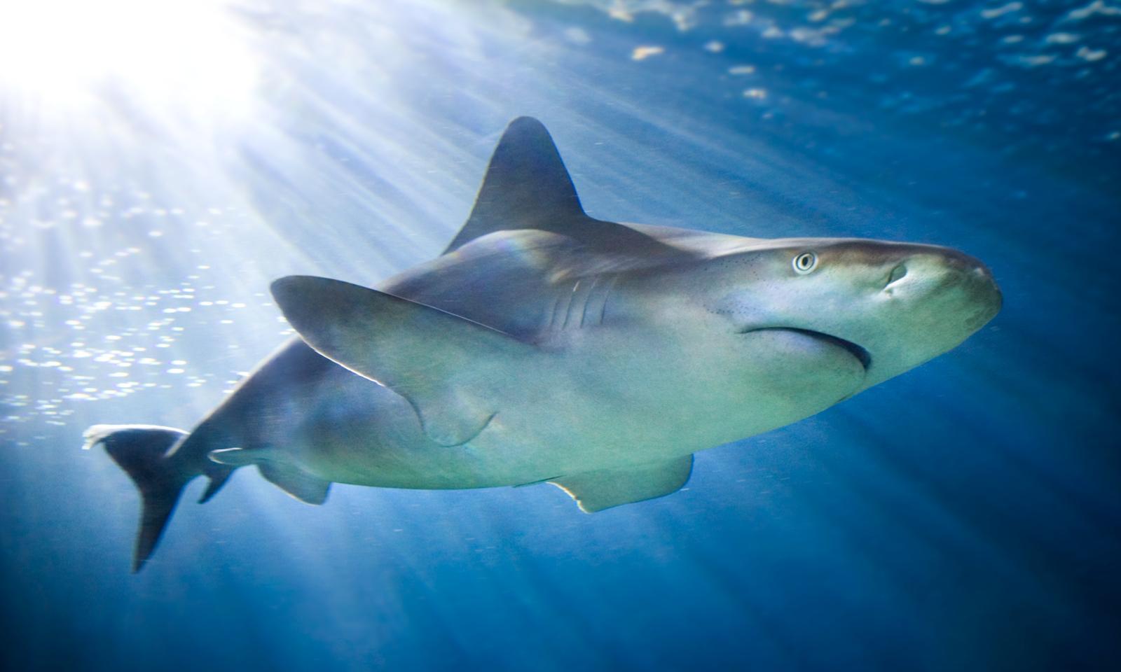 Virtual Shark Feeding Tour