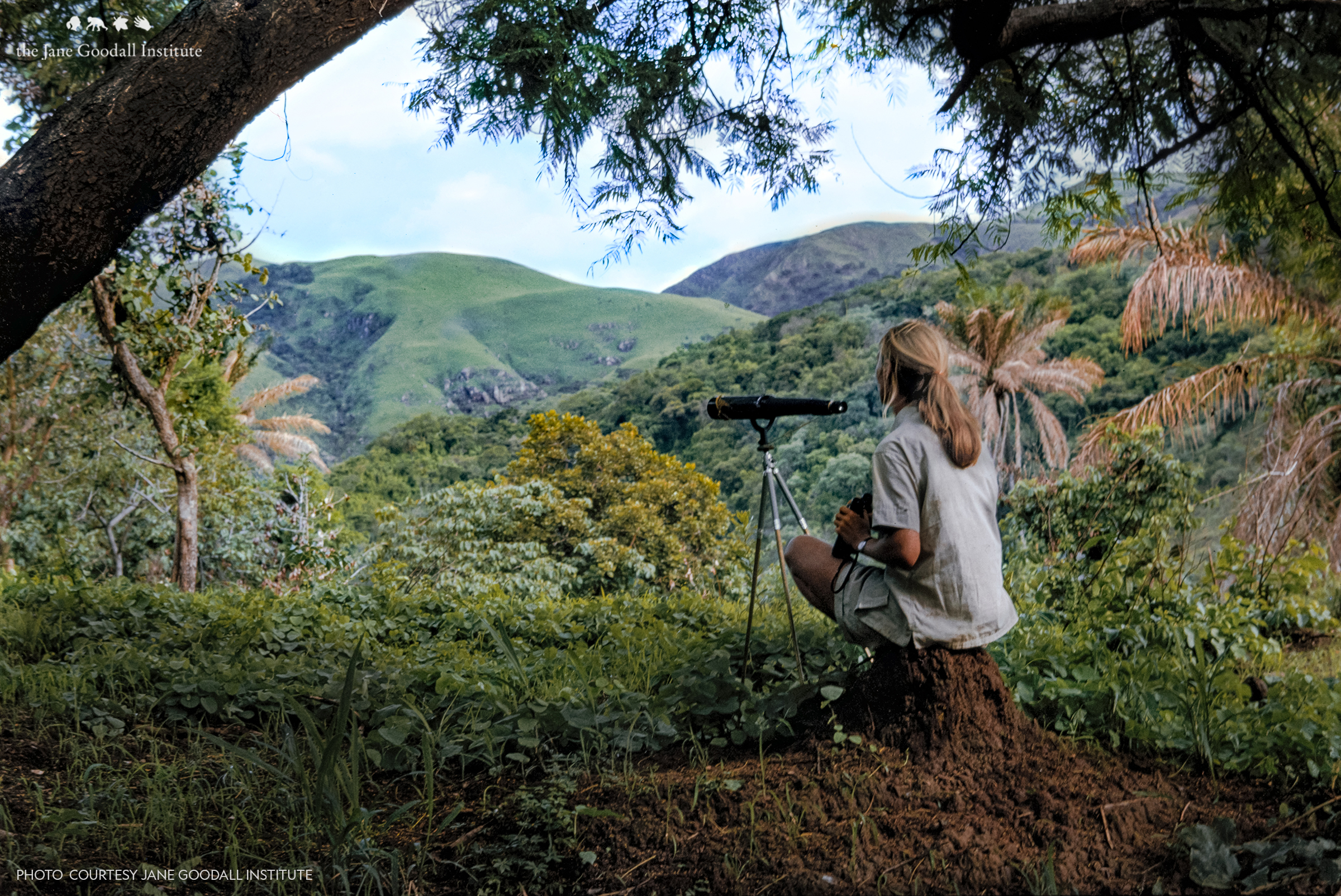 Becoming Jane: The Evolution of Dr. Jane Goodall
