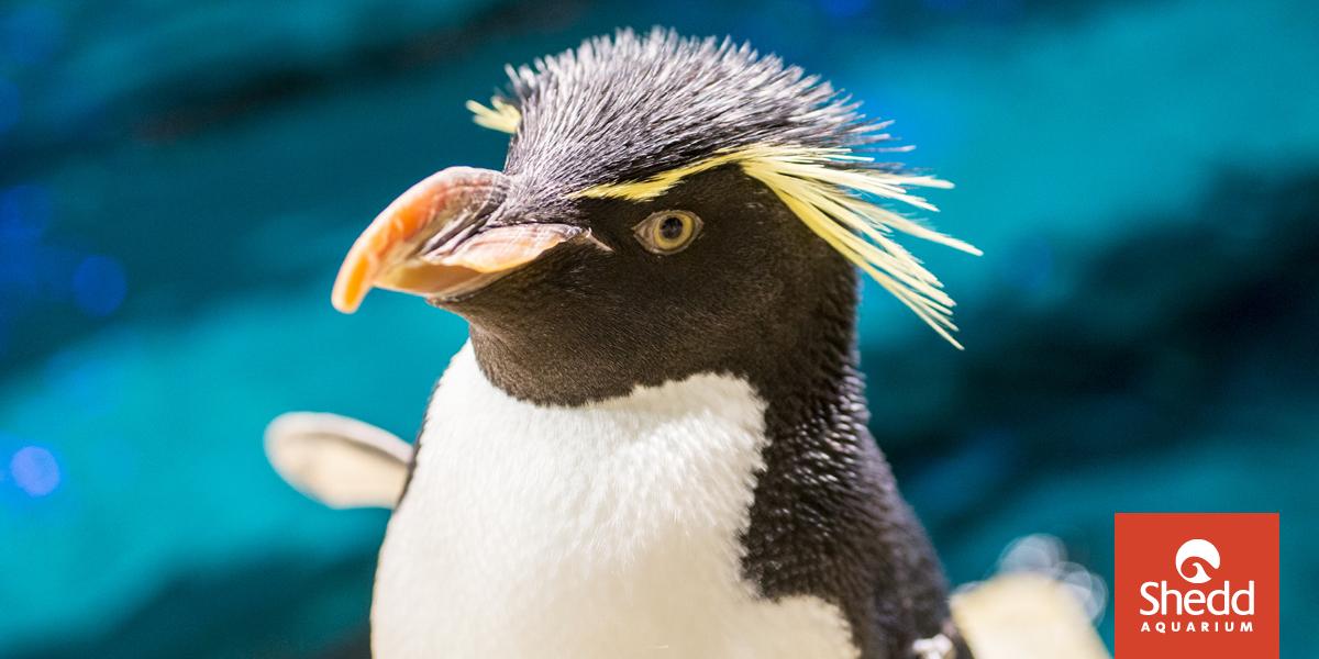 Virtual Penguin Encounter